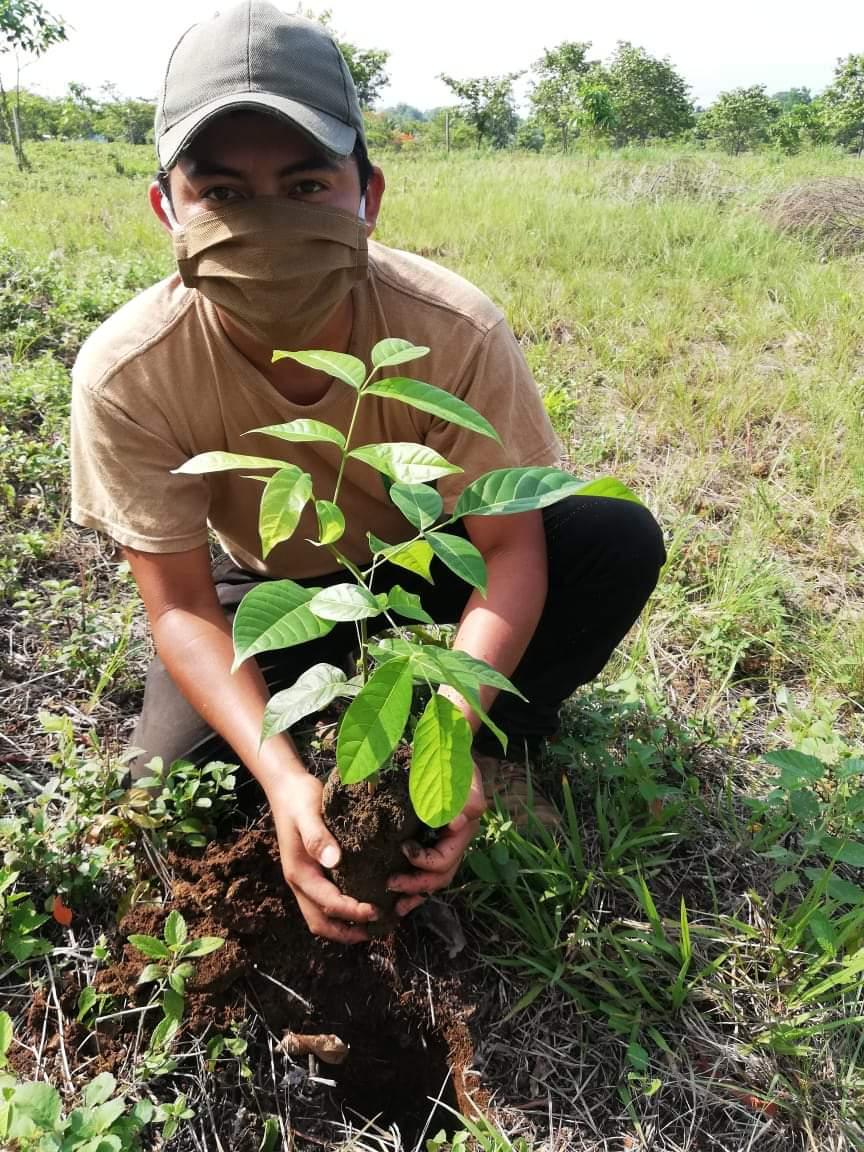 Reforestación en Izabal