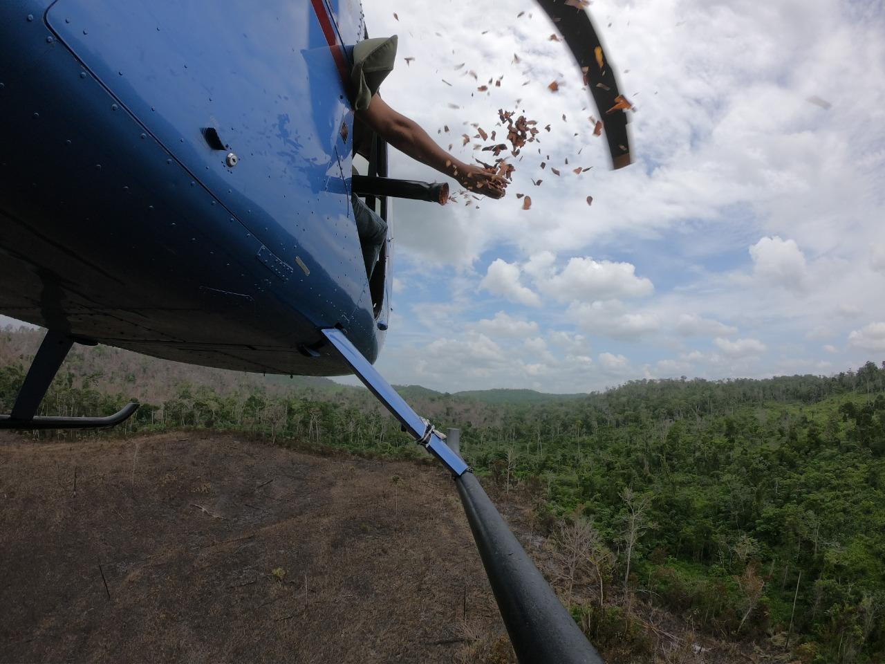 """""""Lluvia de Semillas en la Zona de Uso Múltiple de la Reserva de Biosfera Maya"""""""