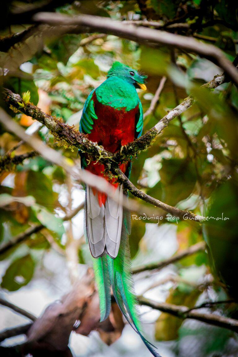 43 Aniversario del Biotopo Protegido del Quetzal