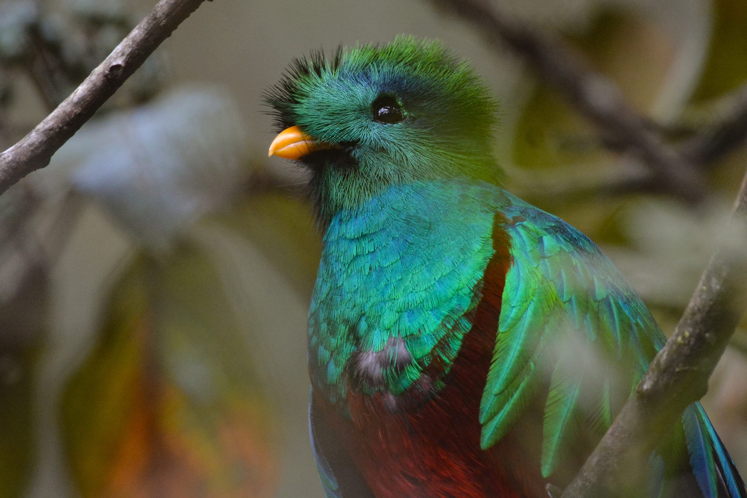 44 Aniversario del Biotopo del Quetzal